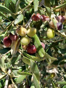 Olimendros Aceite oliva virgen extra